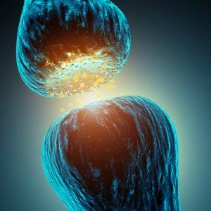 Synapse lsd